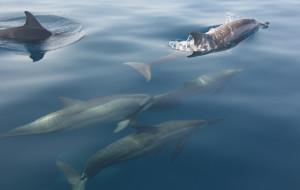 巴厘岛娱乐-罗威娜看海豚