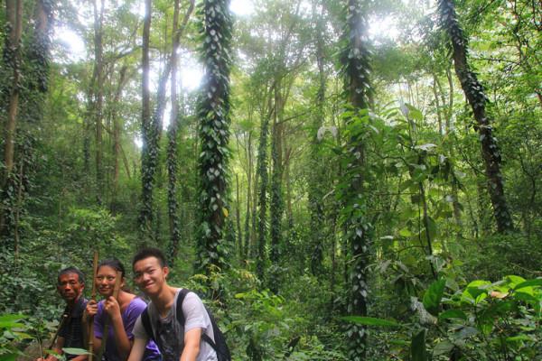 王柏原始森林图片