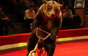 俄罗斯娱乐-尼库林马戏团