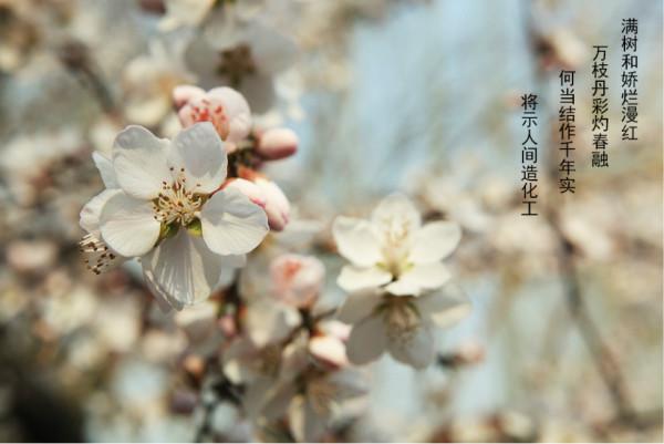 各种花卉拍摄图片