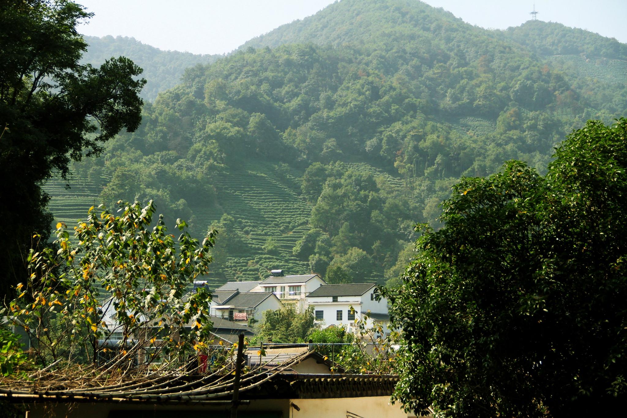 什么时候去龙井村好,龙井村最佳旅游时间