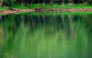 【兴隆图片】青绿满路春归了