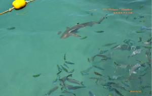 马来西亚娱乐-芭雅岛海洋公园(浮潜)