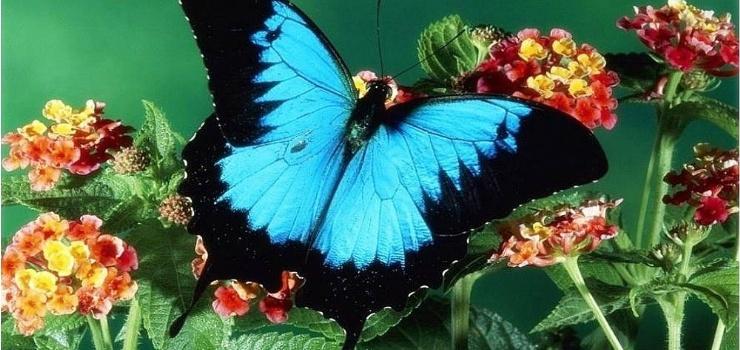 东湖蝴蝶花园