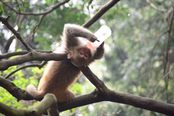 黔灵山公园,园里风景秀丽,植被茂盛,因前天晚上下雨道路有点湿滑,但这丝毫不影响我们玩的热情。可能是刚刚接触贵州吧,一切是那么的新鲜。最可爱的就是公园里的野生猴子不怕人,人们能近距离的接触猴子。 活泼、可爱的猴子      继续上图片  贵阳市区的甲秀楼景区    开始第一天的正式游览,贵州省开阳县青龙河镇,这里的油菜花还在盛开,满眼望去绿叶配上黄花,我猜想:人们的美术作品大概也是从自然界获取的吧。真是美不胜收!这里被称为中国油菜花第一湾        吃完中午饭,驱车赶往南江大峡谷。晚上入住在南疆大峡谷