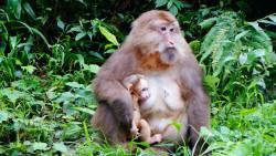 峨眉山娱乐-自然生态猴区