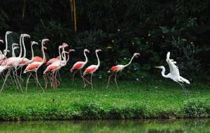 广州娱乐-长隆飞鸟乐园