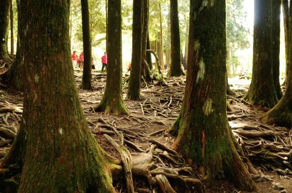 壁纸 风景 森林 树 桌面 600_398