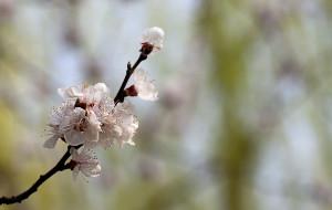 【周至图片】春游新去处——周至沙河水街