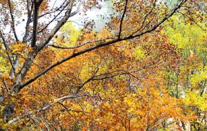 【易县图片】天生桥·狼牙山寻幽品秋色——2013年国庆节