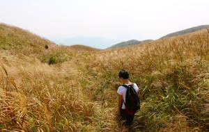 【连州图片】上山看芒草去:初秋的大東山