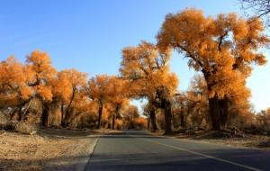 【塔克拉玛干沙漠图片】又去塔里木胡杨林公园