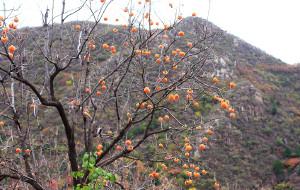 【昌平图片】2014_11_01 昌平 双龙山森林公园 溜达