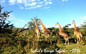 【内罗毕图片】Lydia的狂野假期:2014走进非洲之KENYA SAFARI