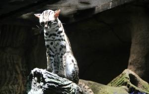 新加坡娱乐-夜间野生动物园