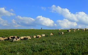 【山丹图片】最后的牧马人——走进山丹军马场