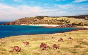 【袋鼠岛图片】袋鼠岛(Kangaroo Island),我道不明的特别和喜爱