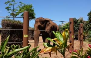 夏威夷娱乐-檀香山动物园