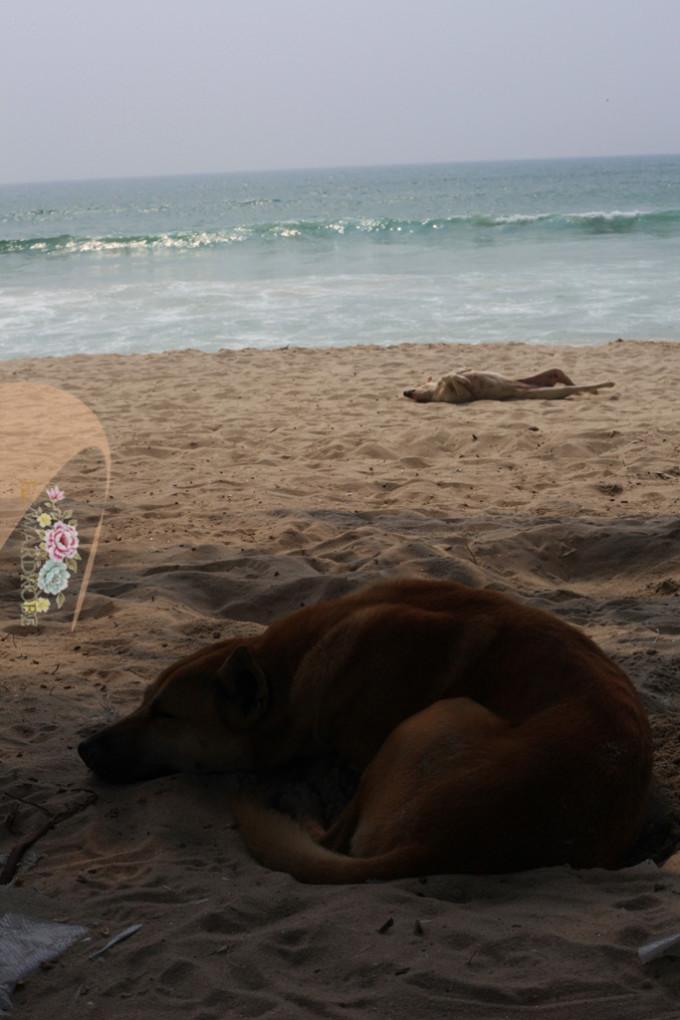 动画海滩钓螃蟹椅