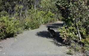 【袋鼠岛图片】袋鼠岛二日游