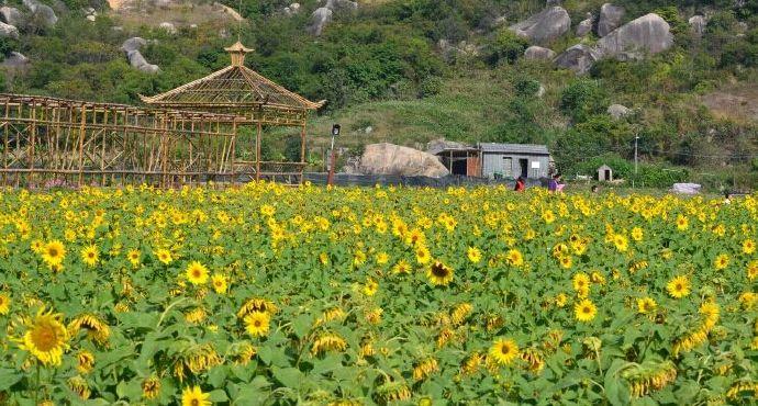 七色地�_涌泉,水库,峡谷平地及梯田,目前已开发七色花海,季节性主题花海,苗家