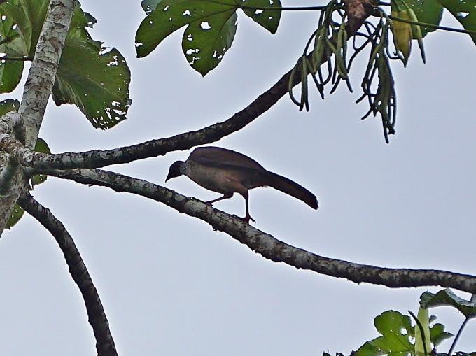 关于热带雨林里的动物,在当地有很多的传说.