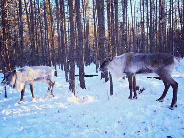 会看见雪地上各种小动物留下的脚印
