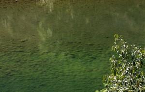 【普洱图片】七彩云南行----从元江县前往江城县途中游玩碧溪古镇