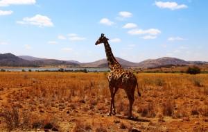 【约翰内斯堡图片】彩虹之国-#南非# South Africa一定会再去的美丽国度~