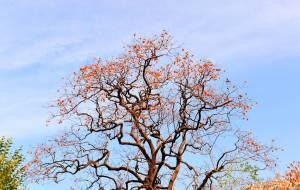 【潍坊图片】晚秋,临朐石门坊,走马观花看红叶