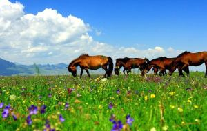 【山丹图片】战马嘶鸣,勇士安在?——张掖亚洲最大军马场游记