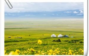 【石河子图片】一场鲜花、雪山与草原的盛宴