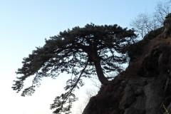 #泰山#-云海之巅,日出奇景