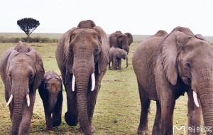 【马赛马拉国家保护区图片】奔腾在没有雾霾的东非大草原——肯尼亚、坦桑尼亚加桑给巴尔岛全攻略