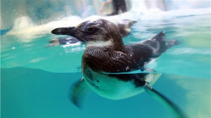 场生动谐趣的海洋动物秀