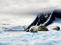 冰封的世界并不是白茫茫——南极半岛、阿根廷17日游_游记