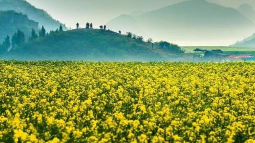 【昆明出发】九乡溶洞,罗平油菜花,万峰林喀斯特地貌群,马岭河大峡谷
