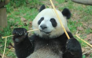 【广州长隆旅游度假区图片】广州长隆+珠海长隆 亲子6日休闲游