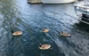 【温哥华岛图片】Parksville/Nanaimo - 2015 温哥华岛夏日游记4