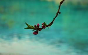 【盘山图片】#游记小赛#姹紫嫣红总是春