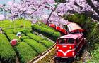 台湾阿里山森林小火车票(嘉义至奋起湖)