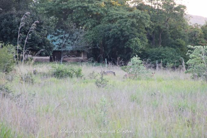 克魯格國家公園自助遊攻略