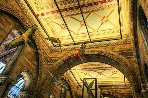 在伦敦自然历史博物馆发现最大的恐龙化石